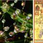 homeopatia-y-ecosistemas-cartell-pdf